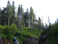 08240064_dead_forest