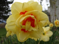 04210016_yellow_flower