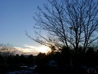 01030003_tree_and_sunset
