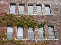 07030137_windows_near_umista