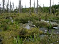 07030082_water_in_swamp