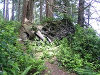 06230049_tree_stump