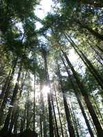 06270006_sunglihgt_through_the_trees