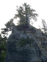 06230015_trees_on_top