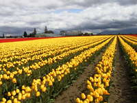 016_yellow_and_red_field