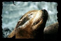 001_seaworld-seal