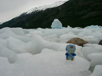 11160018_kitty_in_moreno_glacier