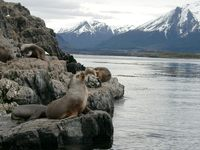 11040035_lions_and_mountains
