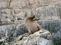 11040038_lion_and_sea_gull