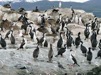 11040119_penguins_with_wings