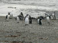 11090023_penguin_social_group