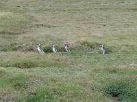11090025_a_team_of_penguins