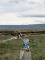 11090028_which_one_is_real_penguin