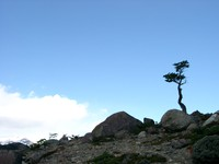 11180063_lonesome_tree_on_hill