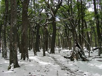 11190013_forest_in_snow