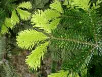 11260041_green_leaves