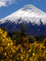 11270031_osorno_and_yellow