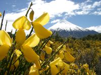 11270036_flowers_from_the_volcanic_soil