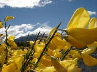 11270048_more_yellow_flowers