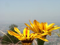 11290095_yellow_flowers