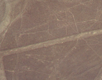 006_nazca_lines_-_whale