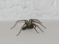 0999_sscary_spider