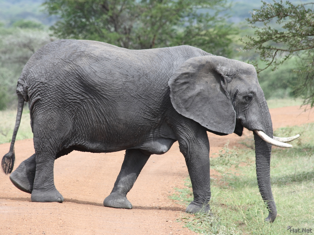 mother elephant with breast