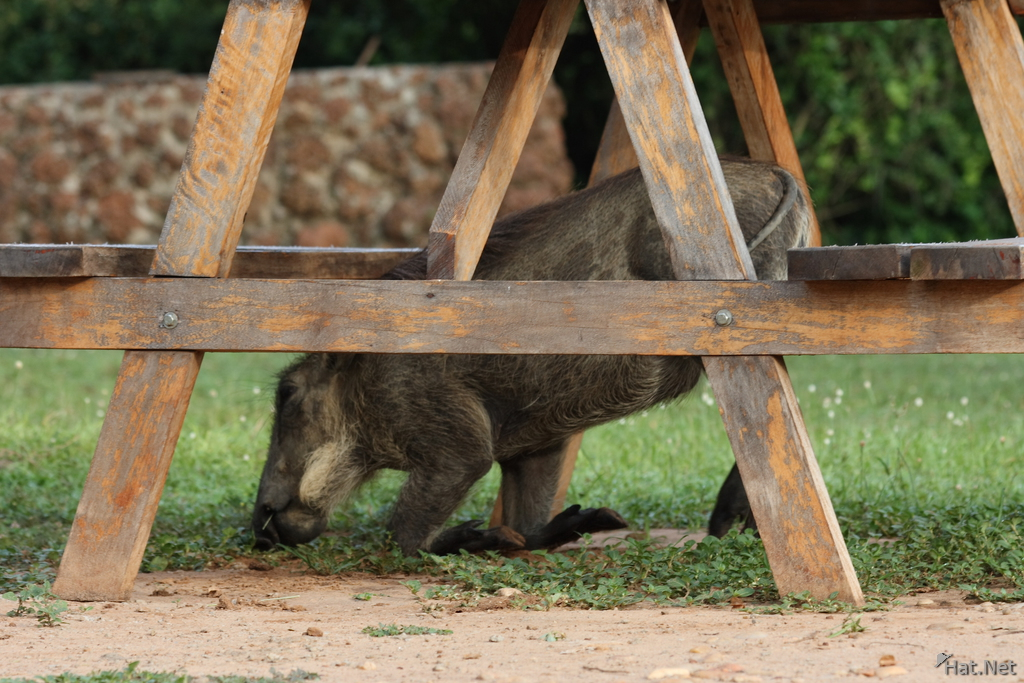 what hides under the picnic table