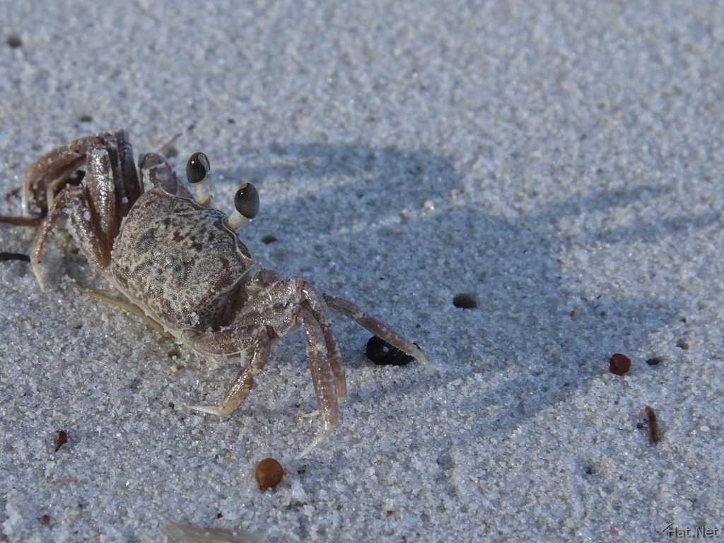 view--sand crab