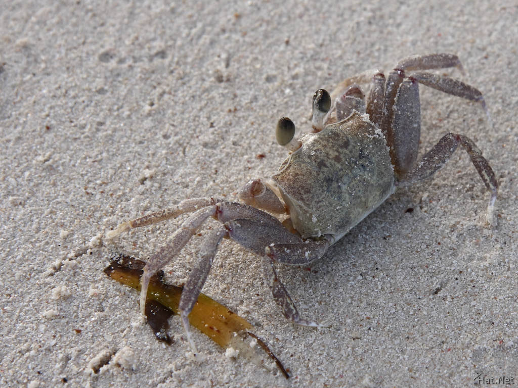 a crab story The horseshoe crab and the red knot the horseshoe crab and the red knot each have amazing, yet inseparable stories they are an example of the interdependence of two creatures and their importance in the.