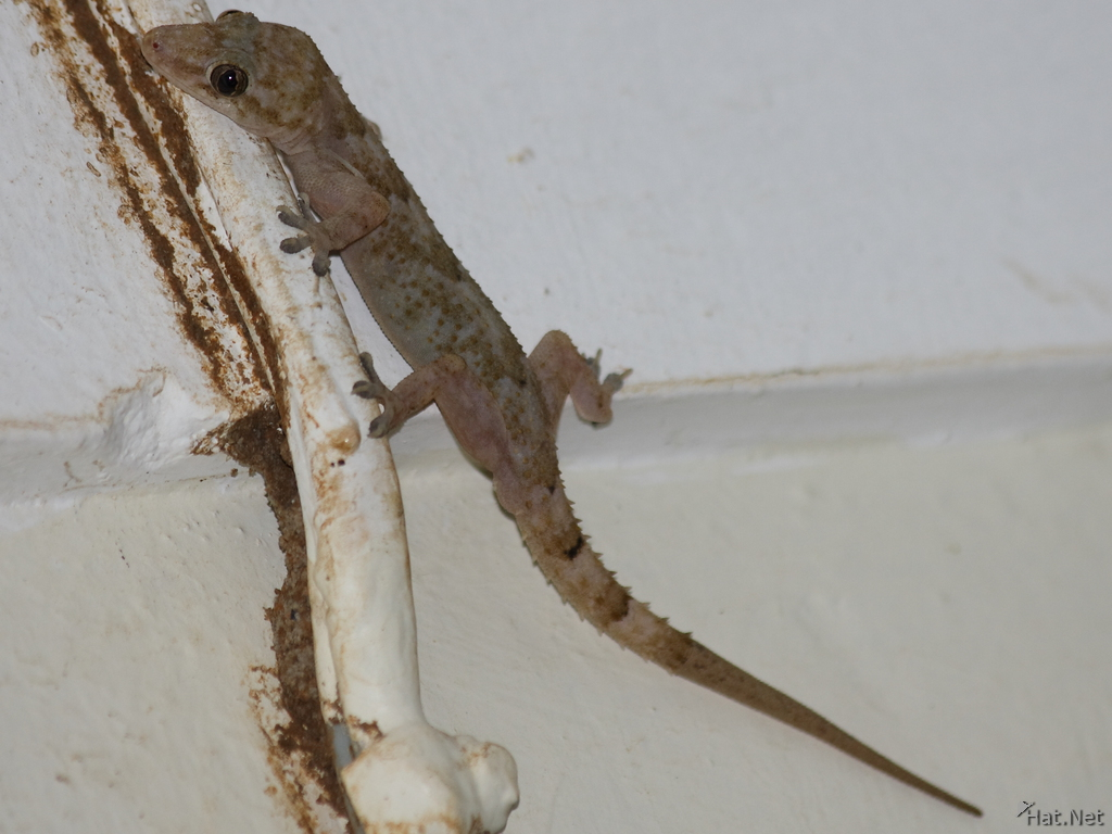 gecko in hotel room on ssese island