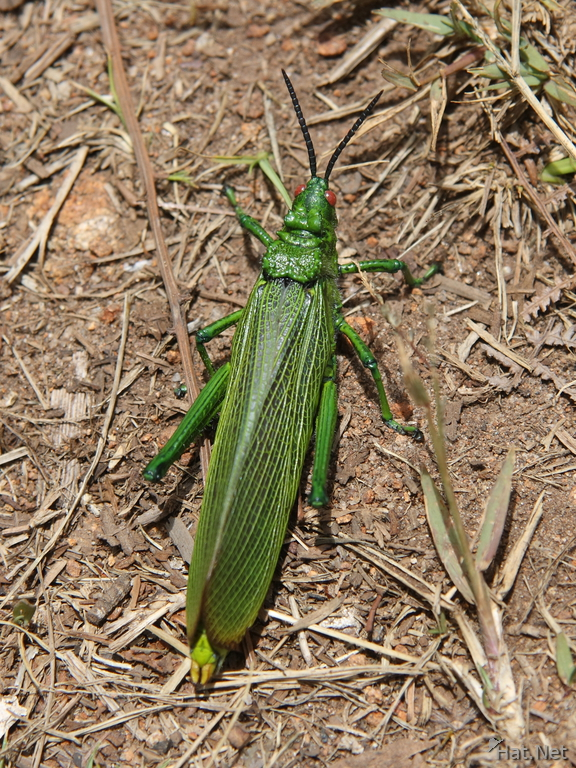 view--giant grasshopper