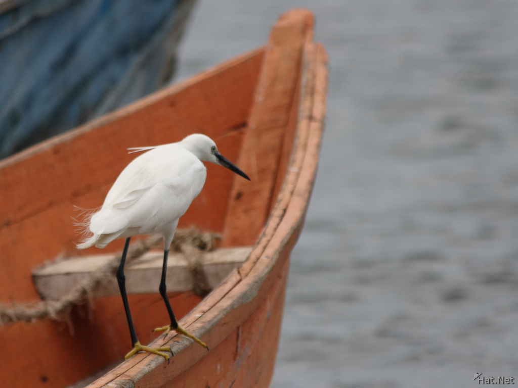view--egret on orange boat