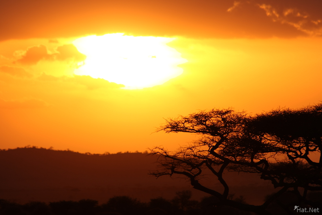 sunrise of serengeti