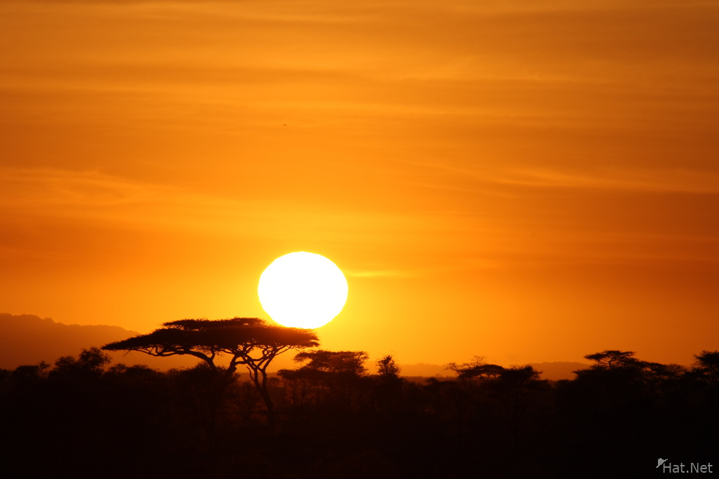 view--sunrise and acacia tree