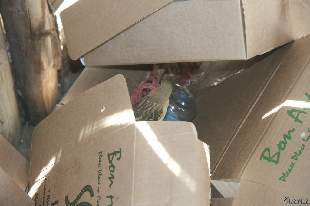 bird in boxes