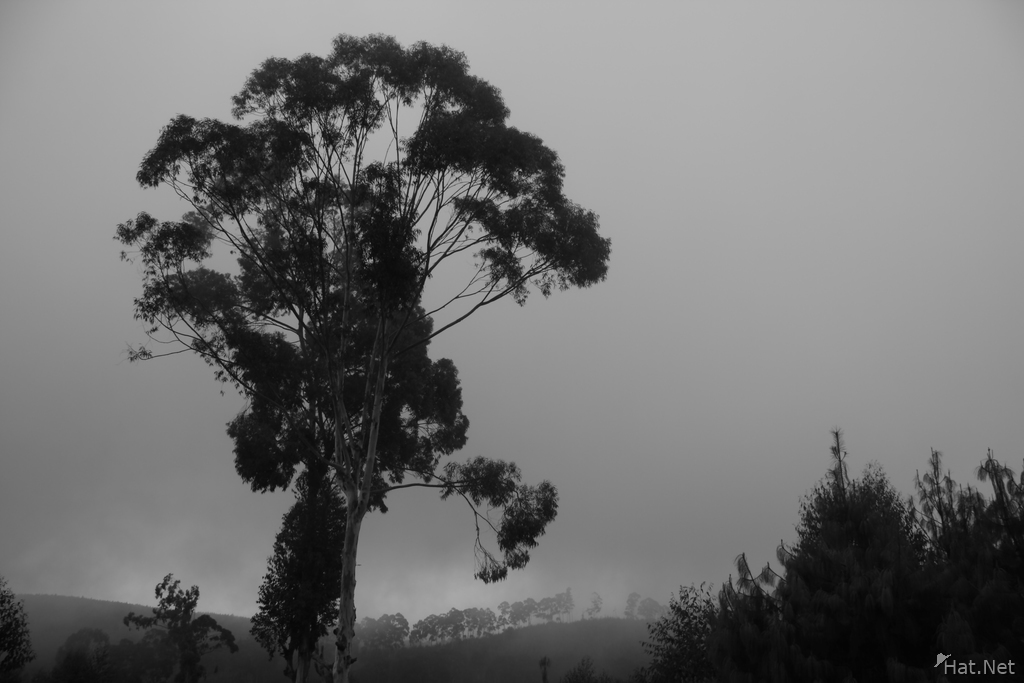 view--misty tree
