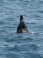 071008104710_dolphin_nose