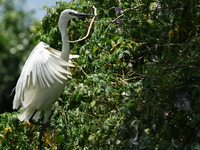 070923122245_great_egret