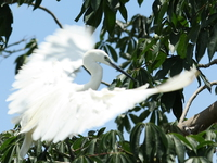 070923122507_egret_spread_wings