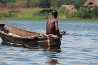 view--fish seeker Jinja, East Africa, Uganda, Africa