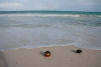 two coconut shells Diani Beach, East Africa, Kenya, Africa
