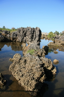 071008161945_coral_rock