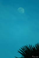 view--blue moon of river nile Jinja, East Africa, Uganda, Africa