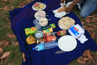 f.picnic lunch at usambara Ushoto, East Africa, Tanzania, Africa