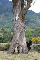 hollow tree Ushoto, East Africa, Tanzania, Africa