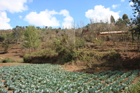 071016094625_cabbage_farm