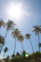 071006140826_palm_forest