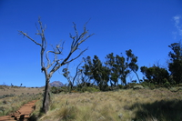 071025091957_barren_tree