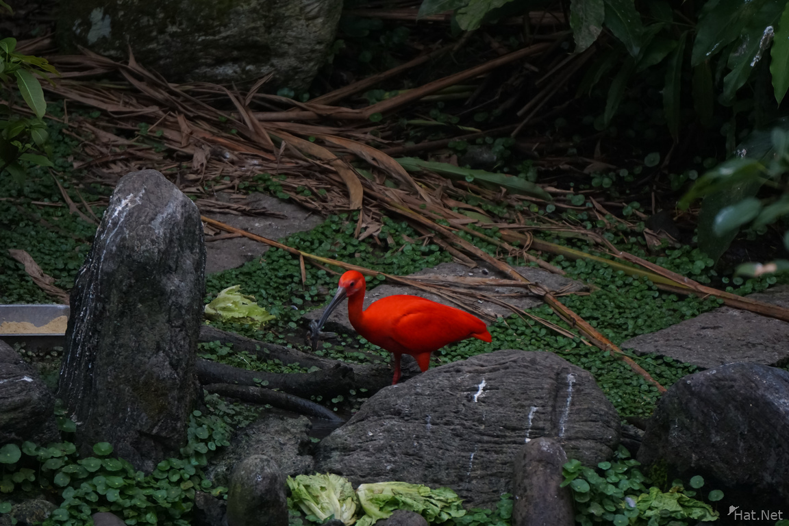 Birds of Taipei Zoo